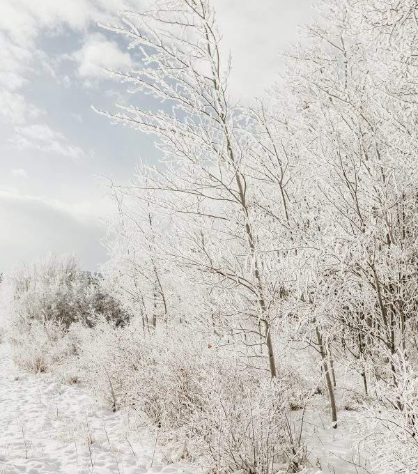 Winter Solstice Manifestation